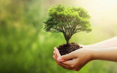 Fatüzelés: környezetbarát fűtés megújuló energiával